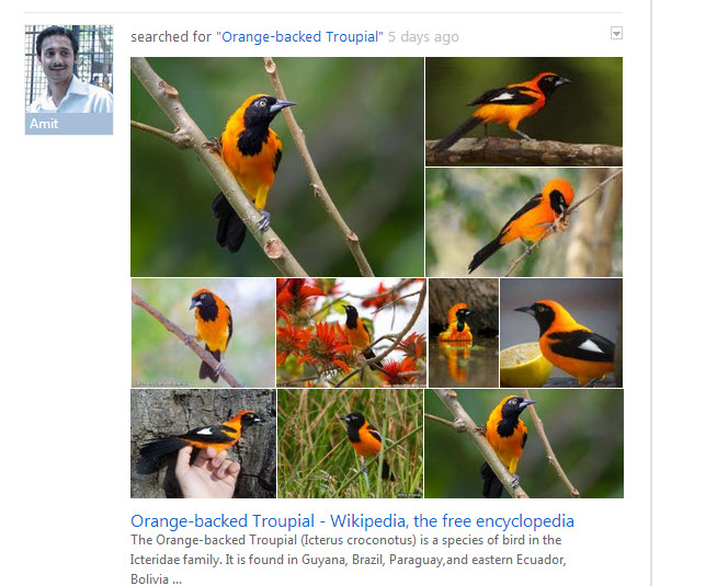 Orange Backed Troupail